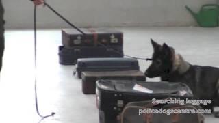 Drug Detection Dogs