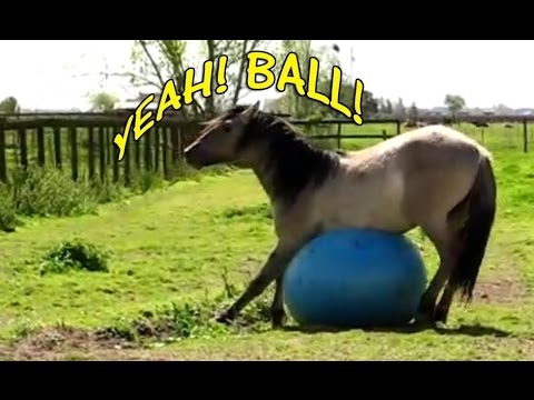 Funny Horses Playing With Balls Compilation 2015 [NEW]