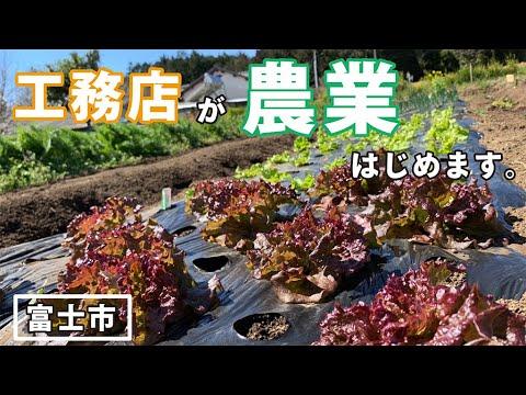 富士市の工務店が農業はじめます。富士山のふもとで育てる野菜たち