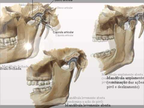 Movimiento de la articulación temporomandibular