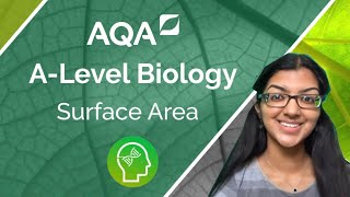 AQA A Level Biology: Surface Area to Volume Ratio