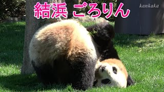 結浜 ごろりん  Giant panda. Name is Yuihin(结浜/Jie Bang).