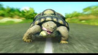 TVC DNB Nord Bank Turtle Vezlys