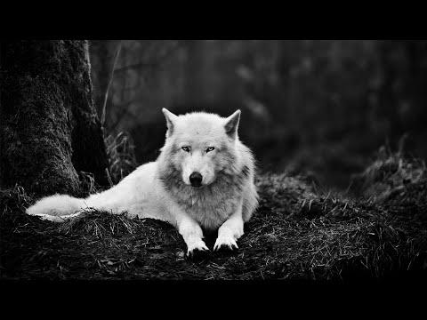 #Paws by Claws ep.14 #kristina kashytska #wolf toys