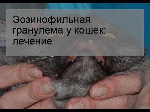Эозинофильная гранулема у кошек: лечение