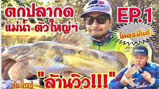 ตกปลากดโคตรมันส์‼️( EP.1 ) ปลากดเหลืองแม่น้ำตัวใหญ่ๆ ไซด์สวยๆ เยอะมาก!!!