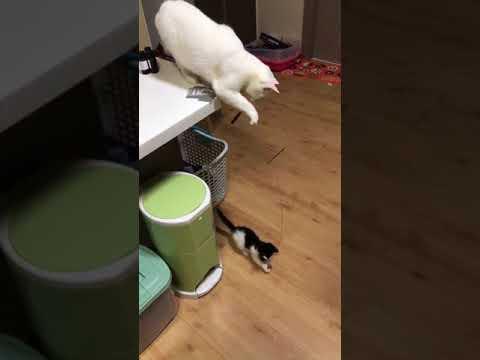 Кошка забавно развлекает своего котенка