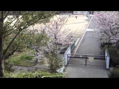桃山台小学校と桜 2012.4.7