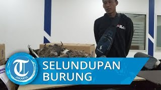Puluhan Burung Diselundupkan ke Dalam Speaker dari Malaysia, Hanya 6 Bertahan Hidup