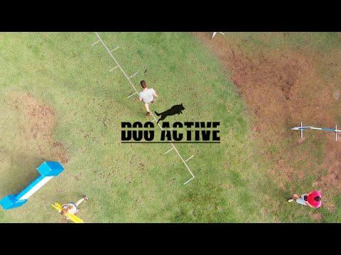 Dog Active Agility, Israel 4K UHD