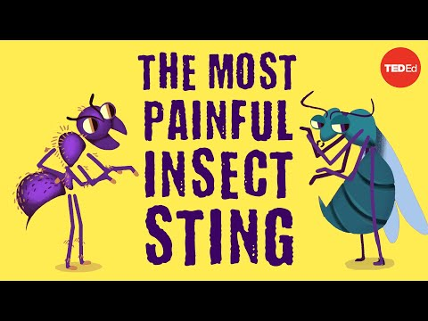 Which Insect's Sting Hurts the MOST?