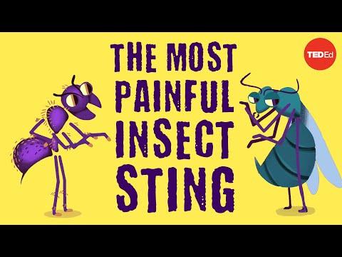 Nejbolestivější hmyzí bodnutí