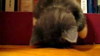 なぜそこで寝たのか聞きたくなる子猫-Yahoo!映像トピックス.mp4