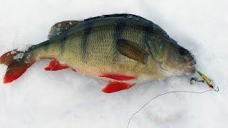 Как поймать окуня на рыбалке