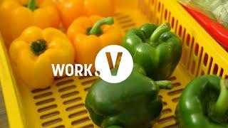 The WORK Series - Kamereo