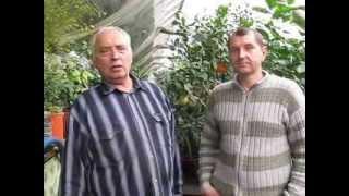 Теплица-термос видео