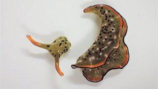 Why This Slug Cut Off Its Own Head
