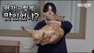 다 맛있었구나? ㅣ G.O.A.T Super Fat Cat Is Here!