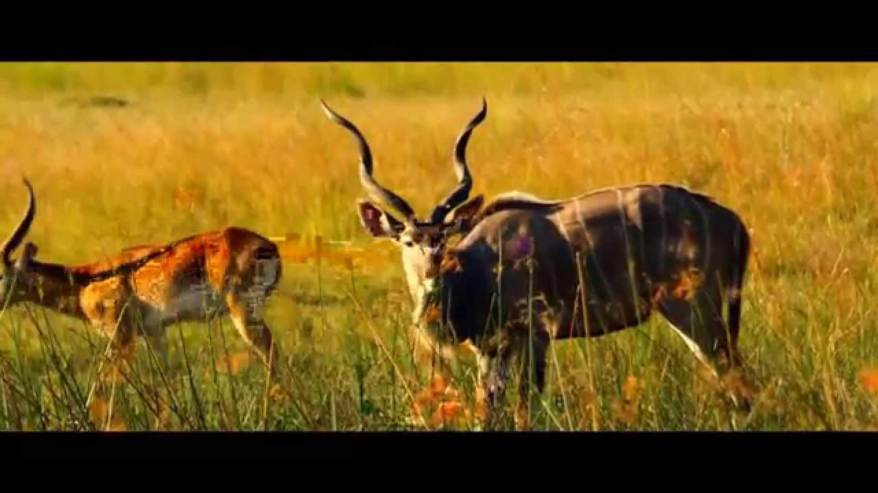 Namibia: Caprivi (0:23)