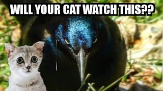 WILL YOUR CAT WATCH THIS?  - Bird Videos Are Visual Catnip!