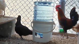 صنع سقاية للدجاج