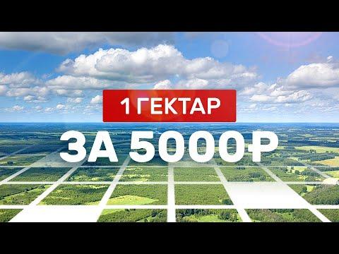 Как получить 1 Га земли за 5000 руб. Лесной участок под пчеловодство 2020. Аренда лесного участка