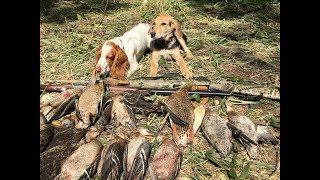 Охота по перу 2018. Открытие летне-осенней охоты.