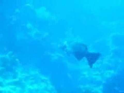 Sharm el Sheik - Thomas Reef, Thomas Reef,Ägypten