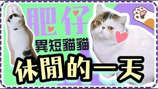【貓貓Vlog🐱】肥仔休閒的一天,我家的扁鼻貓又可愛又搞笑!😂丨一起來看貓貓每天都在做什麼呢?