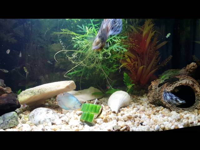 Tropical Fish Tank,  Mollies,  Gourami's,  Neons,  Betta Fish..