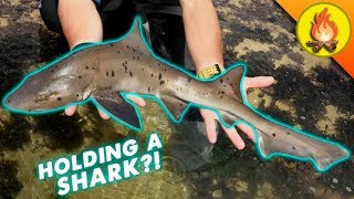 2018's MOST EPIC Animal Catch!