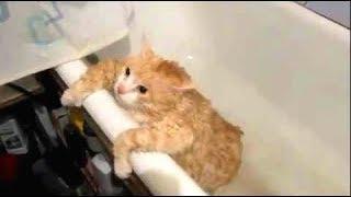 Смешные Kошки и Милые Котята 2019 ♥ Cat Marabacha #29