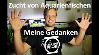 Zucht Von Aquarienfischen   Meine Gedanken