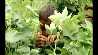 Media's Responsive Role in Child Labor