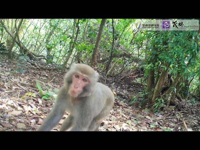 <html> <body> 茂林動物篇 ─ 台灣獼猴之三 </body> </html>