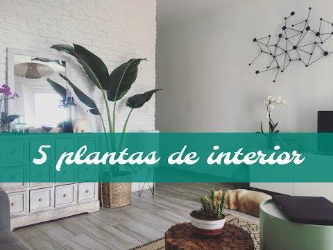 MIS 5 PLANTAS FAVORITAS PARA INTERIOR - CAROLINA TOLEDO