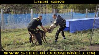 Trainingday Steelblood Bandog Kennels SBK9 Full HD