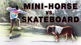Mini Horse Reacts to Skateboarding