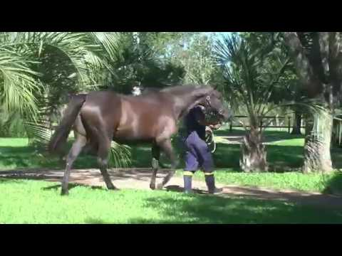 Lote LADY OF WAR (ARG)