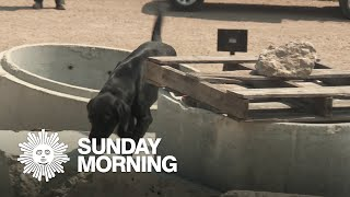 From rescues to rescuers: Training search dogs