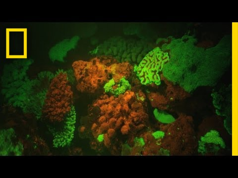 """Glow in the Dark"" Reefs Revealed 