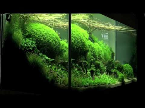 Aquascaping – Aquarium Ideas from The Art of the Planted Aquarium 2011, part 1