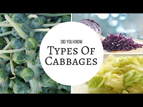 , title : 'Amazing!! Did You Know Types of Cabbages?