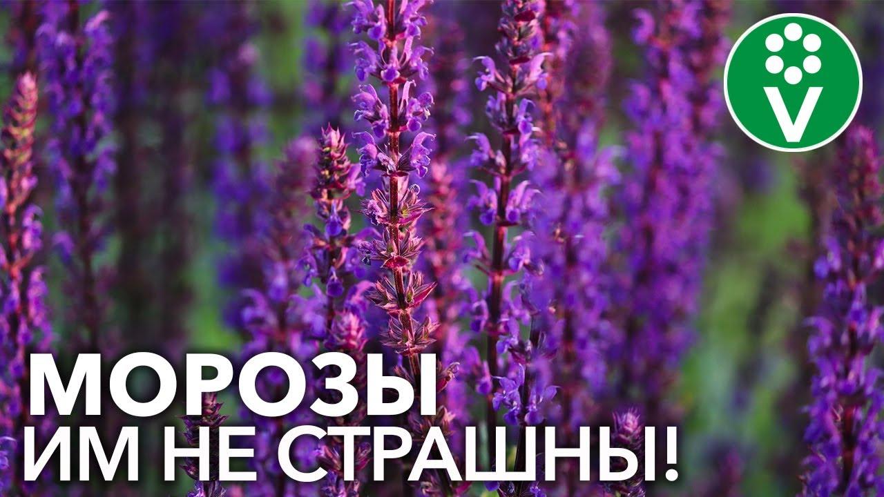 15 лучших однолетних цветов осени