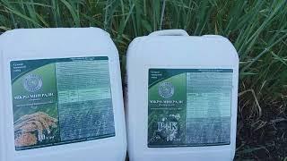 Микро Минералис Зерновые для листовой подкормки Ячменя Пшеницы Просо Mo-0,5 Mg-4 Mn-1 Cu-1,5 Co-0,5 Fe-1,4 Zn-1 В-0,3 от компании ТД «АВС СТАНДАРТ УКРАЇНА» - видео 1