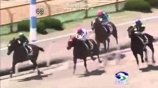 POG20147月5日函館競馬6R新馬ヤジロベエバランスサウスヴィグラス