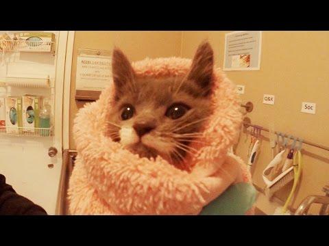 GoPro: 24-Hr Kitten Nursery