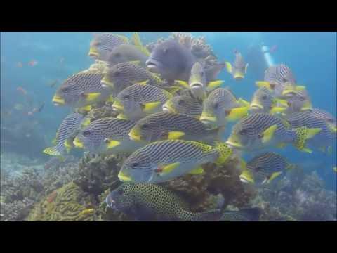 Raja Ampat & Banda Sea 2017