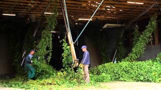Hops From Hallertau   For The World's Best Beers (Long Version)