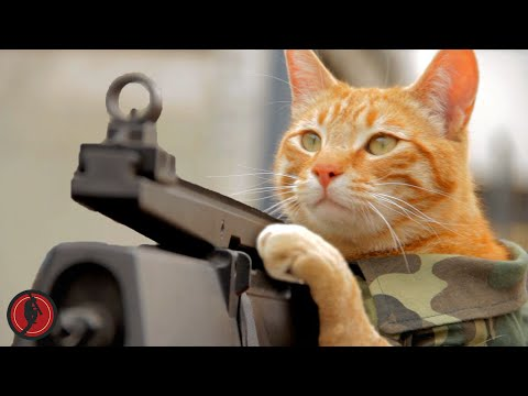 The Medal Of Honor Cat Needs His Own Video Game